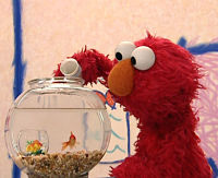 Sesame Street Elmo's world